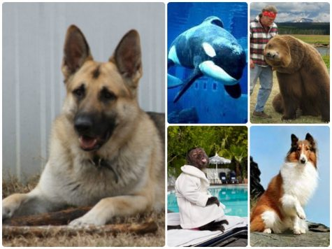 Top 5 Most Paid Animal Actors