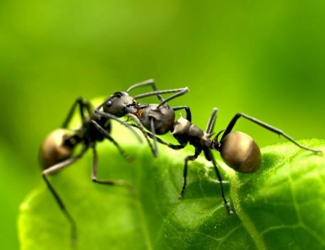 What Actually Happens When Ants Kiss?