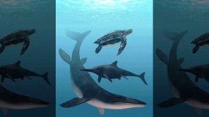 New Discoveries About Ancient Sea Creatures