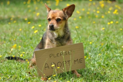 Why You Should Adopt a Dog Rather Than Purchase One