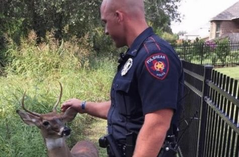 Friendly Deer Gets Rescued by Police After Being Tied Behind House