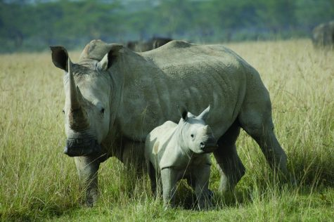 via International Rhino Foundation