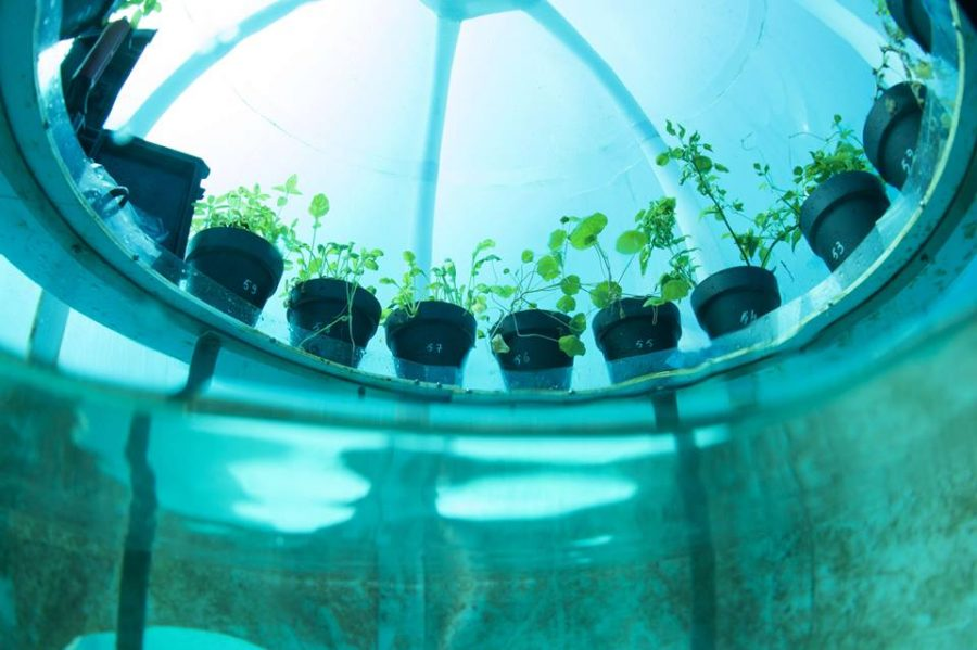 The Use of Water Farming