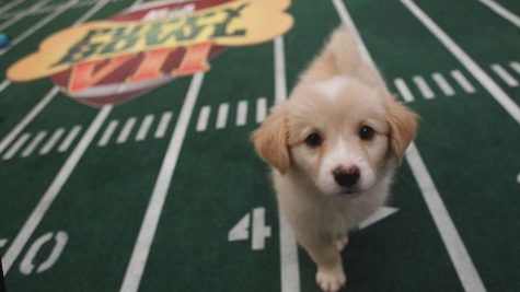 The Puppy Bowl
