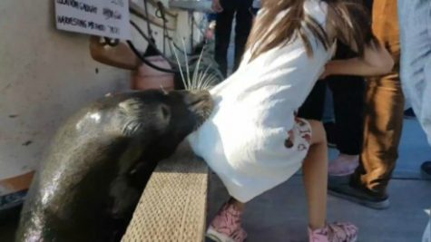 Innocent Girl is Yanked Into the Water by a Sea Lion!