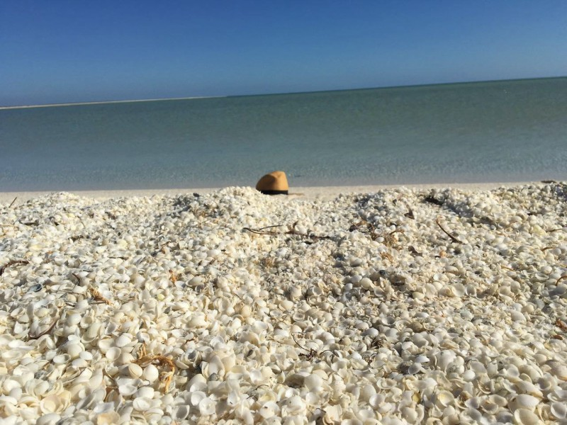 A+great+view+of+Shell+Beach.+