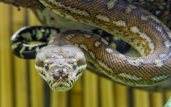 5 Most Deadly Venomous Snakes in the World