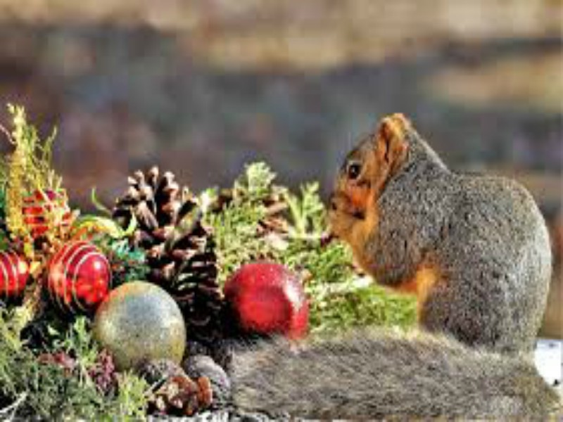 a squirrel and some Christmas ornaments