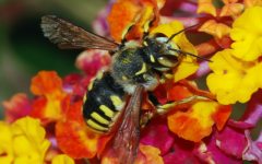 Are The Bees Worth Saving?
