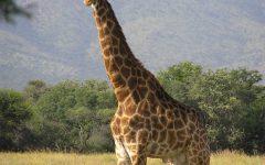 Top 5 Largest Living Animals