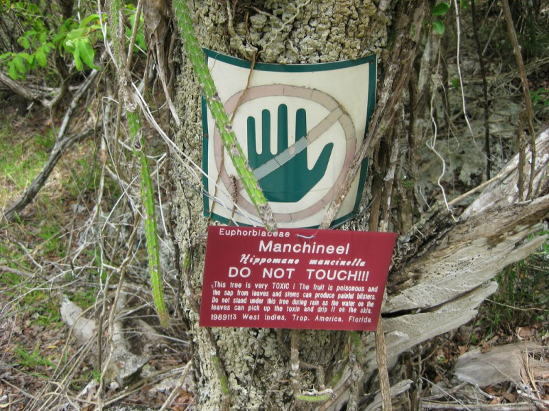 The+Manchineel+Tree
