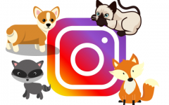 Animals with Instagram Accounts