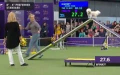 Westminster Dog Show's Winky is a Hit