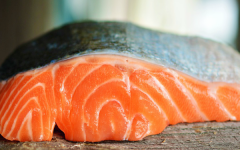 GMO Salmon Coming to Stores