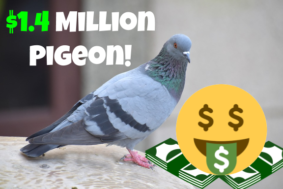 A pigeon named Armando auctions for a record $1.4 million