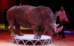 It is Wrong to Use Animals in Zoos and Circuses?