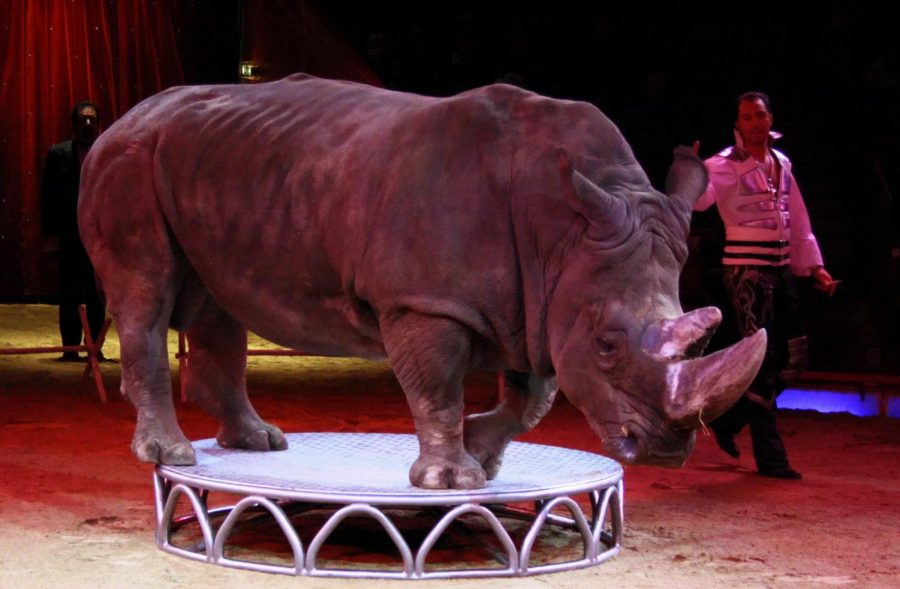 Is it Wrong to Use Animals in Zoos and Circuses?
