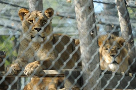 Should Zoos Be Banned?