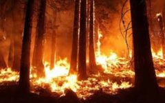 California Fires and the President's Response