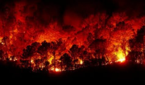 The Australia fires are posing a threat to the survival of all living things within the country