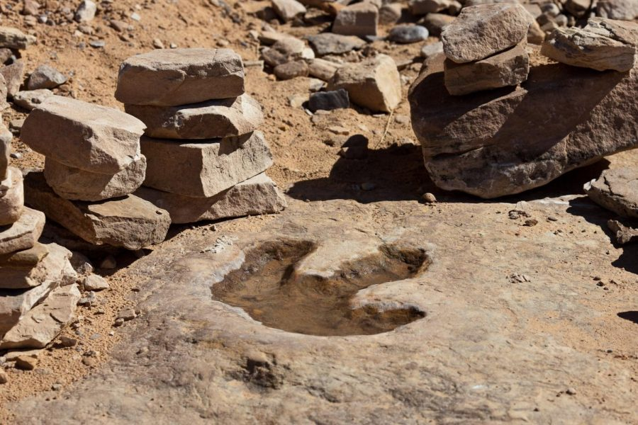 4-year-old Girl Finds a Dinosaur Footprint
