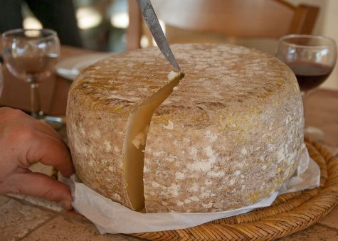Casu Marzu: World's most hardcore cheese